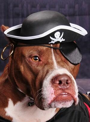 bigstock-Me-thinks-I-m-a-pirate-6100732-1