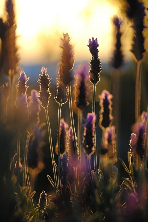 grass-back-lit copy (1)