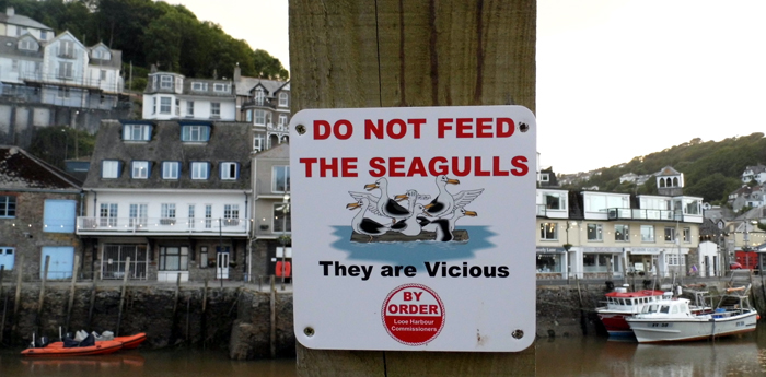 Do Not Feed The Seagulls sign, Looe, Cornwall - photo Gary Dalkin