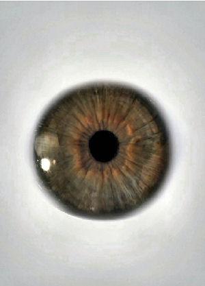 Figure 2 - Eyeball