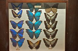 Exotic_butterflies_at_the_Horniman_Museum