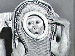 iran-says-it-sent-another-monkey-into-space