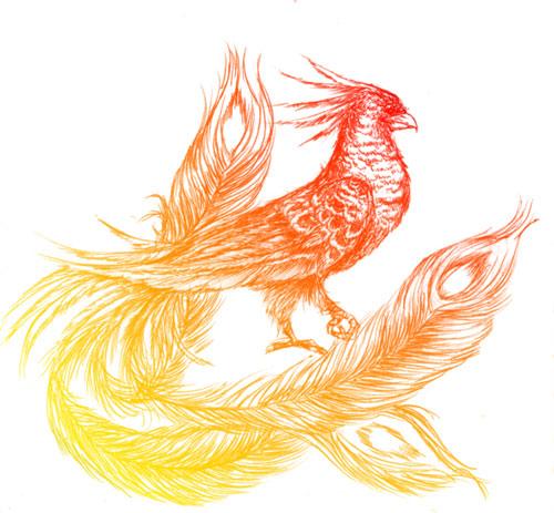 asni_phoenix_03