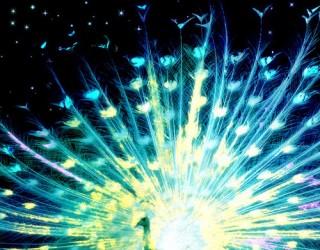 Asni's Art Blog: Cosmic Peacock