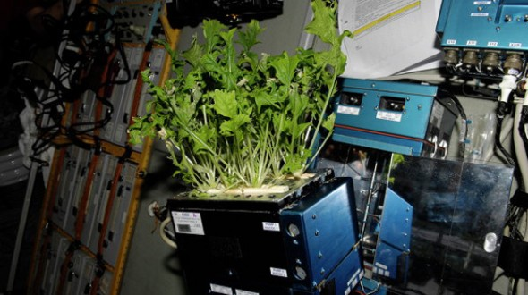 ISS plant studies