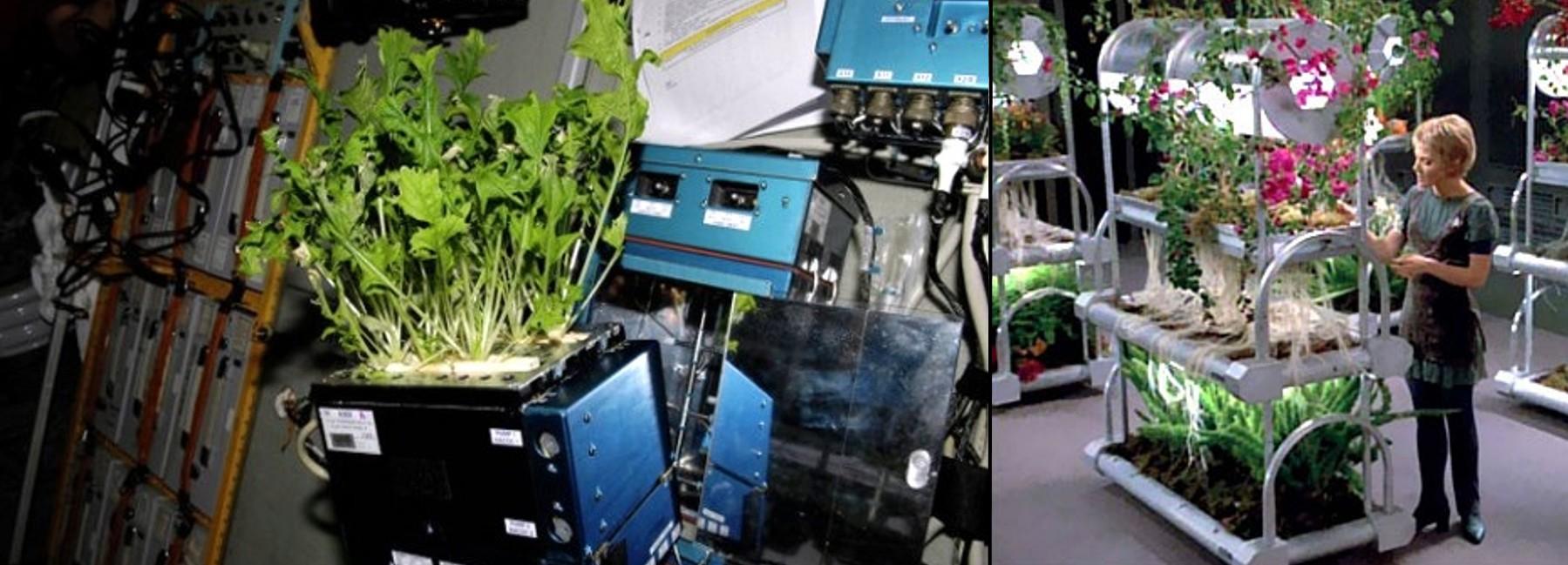 ISS vs Voyager Garden