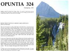 Opuntia-324