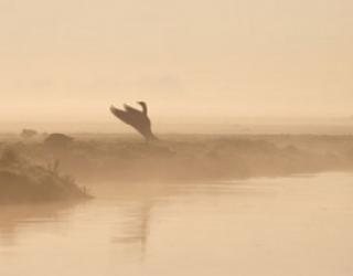 Asni's Art Blog: Magic Goose