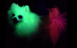 glow dog