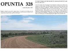 Opuntia-328