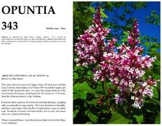 Opuntia-343