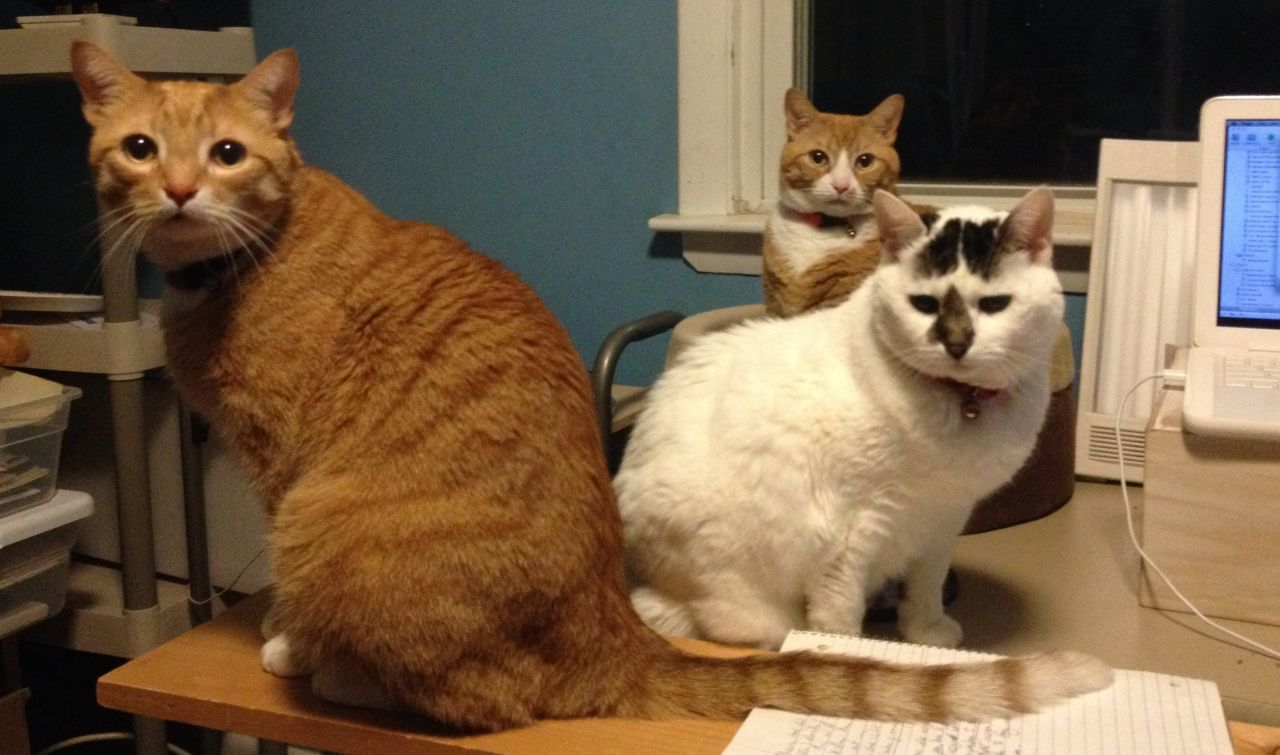 Three cats on a computer desk.