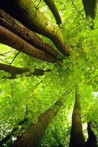 natures-canopy