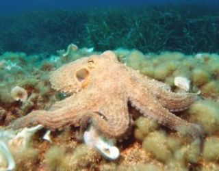 """""""Alien"""" octopuses """"arrived on Earth from space as cryopreserved eggs"""""""