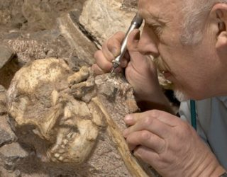 Little Foot Skeleton May be an Entirely New Species of Early Human