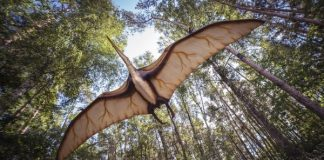 pterosaur-2735500_960_720.jpg